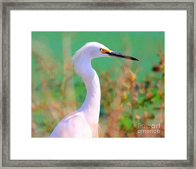 Snowy Egret . Painterly Framed Print by Wingsdomain Art and Photography