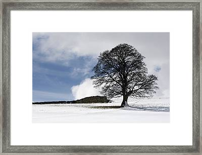 Snowy Field And Tree Framed Print by John Short