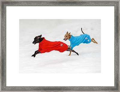Snowy Fun Framed Print by Ari Salmela