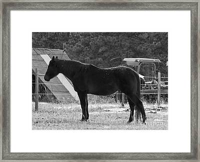 Snowy Horse Framed Print by Angelique Olin