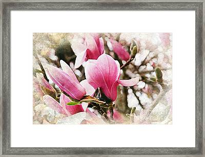 Snowy Magnoila Mist  Framed Print by Andee Design