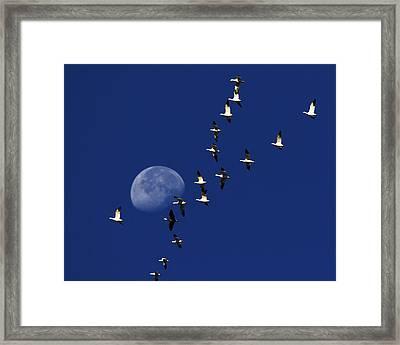 Snowy Moon Framed Print by Tony Beck