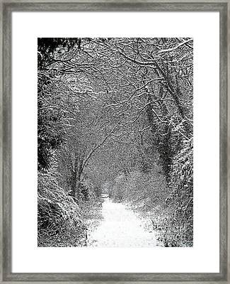Snowy Path Framed Print by Linsey Williams