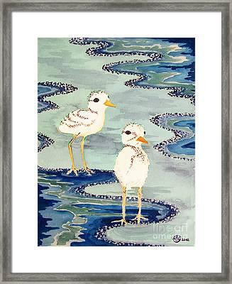 Snowy Plover Chicks Framed Print by Alexandra  Sanders