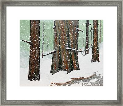 Snowy Redwood Framed Print