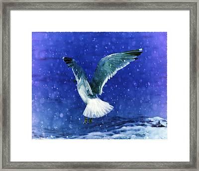 Snowy Seagull Framed Print by Debra  Miller