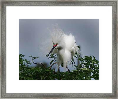 Snowy Stand Off Framed Print by Skip Willits