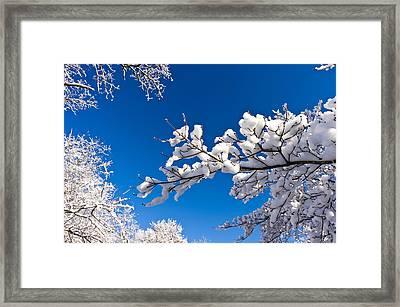 Snowy Trees And Blue Sky Framed Print