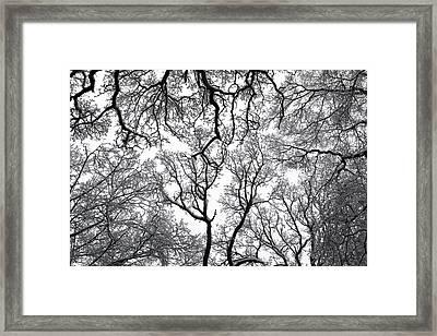 Snowy  Trees Framed Print by Richard Newstead
