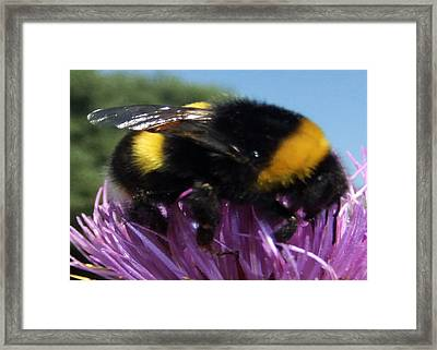 Snuggles Framed Print by Eric Kempson