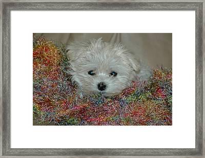Snuggles Framed Print by Lynn Bauer