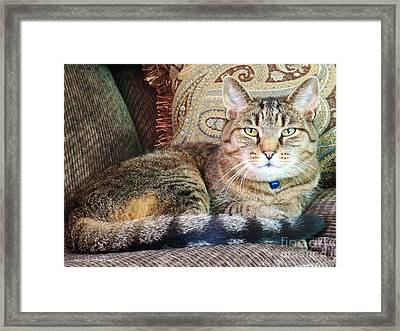Snugs In Camoflage Framed Print by Judy Via-Wolff