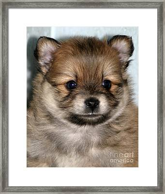 So Cute Framed Print