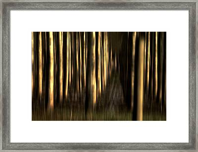 So Many Souls Framed Print by Terrie Taylor