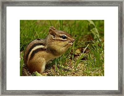 so Much Food So Liitle Time Framed Print by Inspired Nature Photography Fine Art Photography
