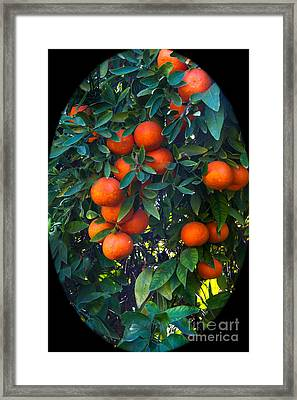 So Sweet Framed Print by Robert Bales