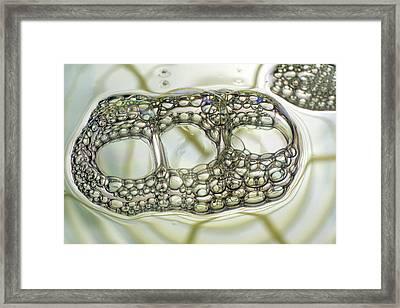 Soap Bubbles Framed Print by Dr Keith Wheeler