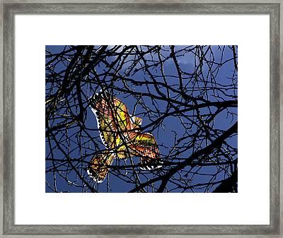 Soar  Framed Print by Andrew Kubica