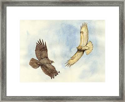 Soaring Buzzards Framed Print by Chris Pendleton