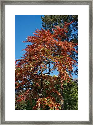 Framed Print featuring the photograph Soaring Fall by Joseph Yarbrough