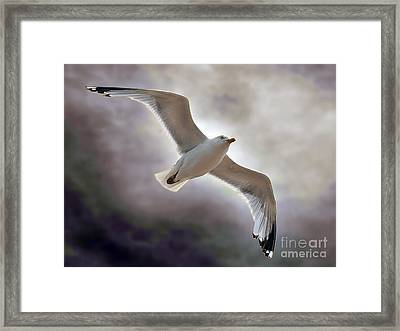 Soaring Framed Print by Graham Taylor