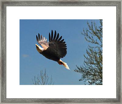 Framed Print featuring the photograph Soaring by Jack Moskovita