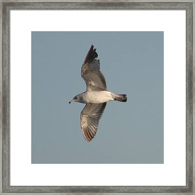 Framed Print featuring the photograph Soaring by Lou Belcher
