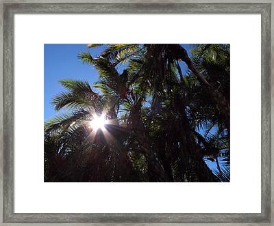 Socal Sun Framed Print by Steve Parr