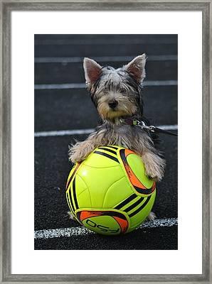 Soccer Dog Framed Print by Dawn Moreland