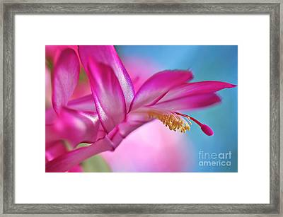 Soft And Delicate Cactus Bloom Framed Print by Kaye Menner