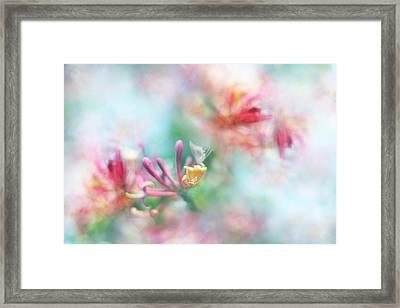 Soft As Honey Framed Print by Sharon Johnstone