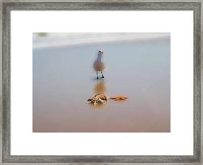 Soft  Framed Print by Betsy Knapp