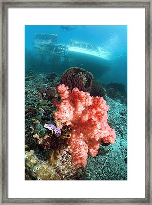 Soft Coral And Sea Squirts Framed Print