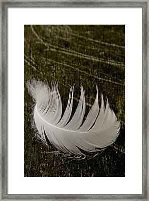 Soft Curve One Framed Print by Odd Jeppesen