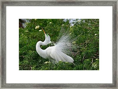 Soft Display Framed Print by Mike Fitzgerald