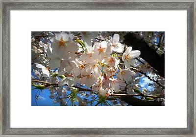 Soft Flowers Framed Print by Lee Yang