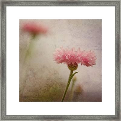 Soft Fragility Framed Print by Joel Olives