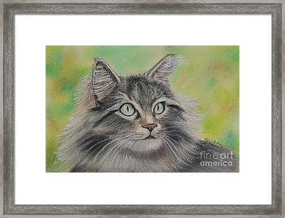 Soft Kitty Framed Print by Julie Brugh Riffey