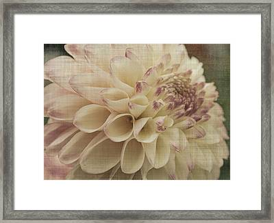 Soft Lady Framed Print by Terrie Taylor