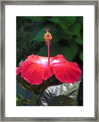 Soft Light Framed Print by Deborah Hughes