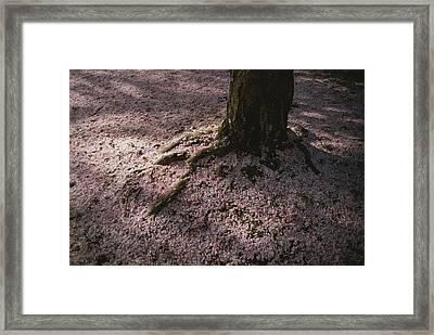 Soft Light On A Pink Carpet Of Fallen Framed Print by Stephen St. John