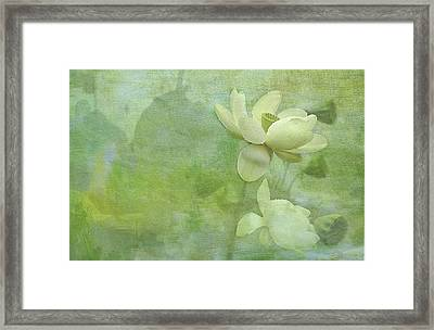 Soft Lillies Framed Print by Carolyn Dalessandro
