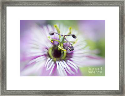 Soft Passion Framed Print by Jacky Parker