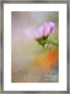 Soft Pastels Framed Print by Darren Fisher