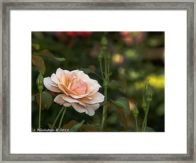 Soft Peach Framed Print by Lauren MacIntosh
