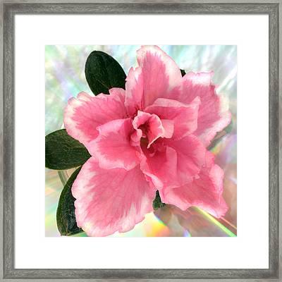 Soft Pink Azalea Framed Print by Terence Davis