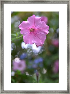 Soft Pink Framed Print by Bonnie Myszka