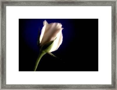 Soft Pink Rose Blue Background Framed Print by M K  Miller