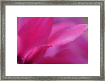 Soft Pink Sensual Flower Framed Print