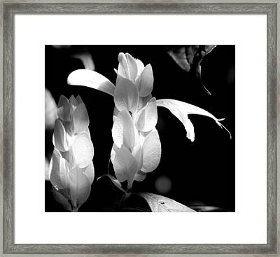 Soft Secrets Framed Print by Elizabeth  Doran